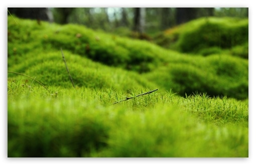 Green Moss ❤ 4K UHD Wallpaper for Wide 16:10 5:3 Widescreen WHXGA WQXGA WUXGA WXGA WGA ; UltraWide 21:9 24:10 ; 4K UHD 16:9 Ultra High Definition 2160p 1440p 1080p 900p 720p ; UHD 16:9 2160p 1440p 1080p 900p 720p ; Standard 4:3 5:4 3:2 Fullscreen UXGA XGA SVGA QSXGA SXGA DVGA HVGA HQVGA ( Apple PowerBook G4 iPhone 4 3G 3GS iPod Touch ) ; Smartphone 16:9 3:2 5:3 2160p 1440p 1080p 900p 720p DVGA HVGA HQVGA ( Apple PowerBook G4 iPhone 4 3G 3GS iPod Touch ) WGA ; Tablet 1:1 ; iPad 1/2/Mini ; Mobile 4:3 5:3 3:2 16:9 5:4 - UXGA XGA SVGA WGA DVGA HVGA HQVGA ( Apple PowerBook G4 iPhone 4 3G 3GS iPod Touch ) 2160p 1440p 1080p 900p 720p QSXGA SXGA ;