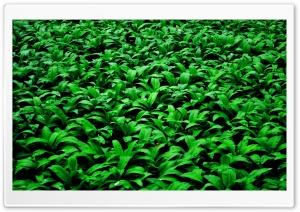 Green Of Land Ultra HD Wallpaper for 4K UHD Widescreen desktop, tablet & smartphone