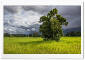 Green Paddy Fields of Don Det, Laos, Asia HD Wide Wallpaper for 4K UHD Widescreen desktop & smartphone