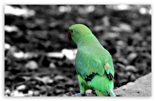 Green Parrot ❤ 4K UHD Wallpaper for Wide 16:10 5:3 Widescreen WHXGA WQXGA WUXGA WXGA WGA ; 4K UHD 16:9 Ultra High Definition 2160p 1440p 1080p 900p 720p ; UHD 16:9 2160p 1440p 1080p 900p 720p ; Standard 4:3 5:4 3:2 Fullscreen UXGA XGA SVGA QSXGA SXGA DVGA HVGA HQVGA ( Apple PowerBook G4 iPhone 4 3G 3GS iPod Touch ) ; Smartphone 5:3 WGA ; Tablet 1:1 ; iPad 1/2/Mini ; Mobile 4:3 5:3 3:2 16:9 5:4 - UXGA XGA SVGA WGA DVGA HVGA HQVGA ( Apple PowerBook G4 iPhone 4 3G 3GS iPod Touch ) 2160p 1440p 1080p 900p 720p QSXGA SXGA ;