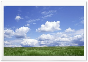 Green Pasture HD Wide Wallpaper for Widescreen
