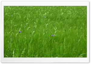 Green Pasture Spring HD Wide Wallpaper for Widescreen