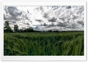 Green Pastures HD Wide Wallpaper for Widescreen