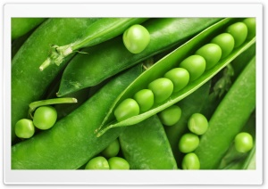 Green Pea Macro HD Wide Wallpaper for Widescreen
