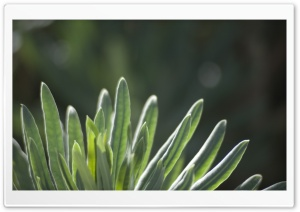 Green Plant HD Wide Wallpaper for Widescreen