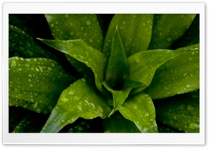 Green Plant HD Wide Wallpaper for 4K UHD Widescreen desktop & smartphone