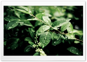 Green Plant Leaves After Rain HD Wide Wallpaper for Widescreen