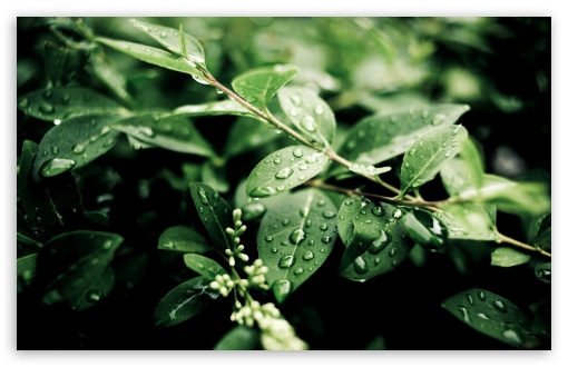 Green Plant Leaves After Rain HD wallpaper for Wide 16:10 5:3 Widescreen WHXGA WQXGA WUXGA WXGA WGA ; HD 16:9 High Definition WQHD QWXGA 1080p 900p 720p QHD nHD ; Standard 4:3 5:4 3:2 Fullscreen UXGA XGA SVGA QSXGA SXGA DVGA HVGA HQVGA devices ( Apple PowerBook G4 iPhone 4 3G 3GS iPod Touch ) ; Tablet 1:1 ; iPad 1/2/Mini ; Mobile 4:3 5:3 3:2 16:9 5:4 - UXGA XGA SVGA WGA DVGA HVGA HQVGA devices ( Apple PowerBook G4 iPhone 4 3G 3GS iPod Touch ) WQHD QWXGA 1080p 900p 720p QHD nHD QSXGA SXGA ; Dual 4:3 5:4 UXGA XGA SVGA QSXGA SXGA ;