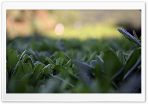 Green Plant Leaves, Summer HD Wide Wallpaper for Widescreen