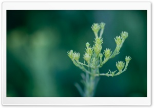 Green Plant Macro HD Wide Wallpaper for Widescreen