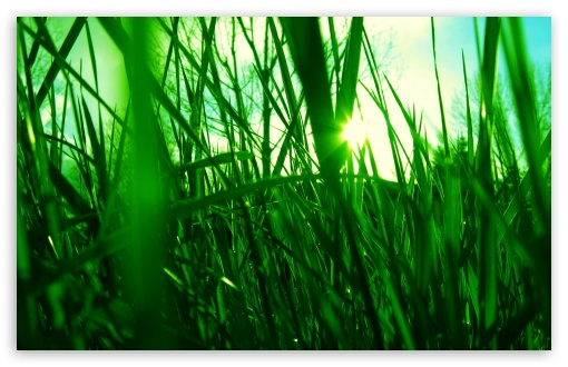 Green Reed HD wallpaper for Wide 16:10 5:3 Widescreen WHXGA WQXGA WUXGA WXGA WGA ; HD 16:9 High Definition WQHD QWXGA 1080p 900p 720p QHD nHD ; Standard 4:3 5:4 3:2 Fullscreen UXGA XGA SVGA QSXGA SXGA DVGA HVGA HQVGA devices ( Apple PowerBook G4 iPhone 4 3G 3GS iPod Touch ) ; Tablet 1:1 ; iPad 1/2/Mini ; Mobile 4:3 5:3 3:2 16:9 5:4 - UXGA XGA SVGA WGA DVGA HVGA HQVGA devices ( Apple PowerBook G4 iPhone 4 3G 3GS iPod Touch ) WQHD QWXGA 1080p 900p 720p QHD nHD QSXGA SXGA ; Dual 16:10 5:3 16:9 4:3 5:4 WHXGA WQXGA WUXGA WXGA WGA WQHD QWXGA 1080p 900p 720p QHD nHD UXGA XGA SVGA QSXGA SXGA ;