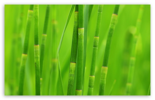 Green Reed Grass HD wallpaper for Wide 16:10 5:3 Widescreen WHXGA WQXGA WUXGA WXGA WGA ; HD 16:9 High Definition WQHD QWXGA 1080p 900p 720p QHD nHD ; Standard 4:3 5:4 3:2 Fullscreen UXGA XGA SVGA QSXGA SXGA DVGA HVGA HQVGA devices ( Apple PowerBook G4 iPhone 4 3G 3GS iPod Touch ) ; Tablet 1:1 ; iPad 1/2/Mini ; Mobile 4:3 5:3 3:2 16:9 5:4 - UXGA XGA SVGA WGA DVGA HVGA HQVGA devices ( Apple PowerBook G4 iPhone 4 3G 3GS iPod Touch ) WQHD QWXGA 1080p 900p 720p QHD nHD QSXGA SXGA ;