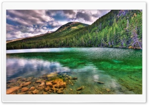 Green Reflections HD Wide Wallpaper for Widescreen