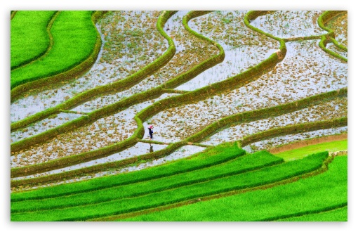 Green Rice Fields ❤ 4K UHD Wallpaper for Wide 16:10 5:3 Widescreen WHXGA WQXGA WUXGA WXGA WGA ; 4K UHD 16:9 Ultra High Definition 2160p 1440p 1080p 900p 720p ; Standard 4:3 5:4 3:2 Fullscreen UXGA XGA SVGA QSXGA SXGA DVGA HVGA HQVGA ( Apple PowerBook G4 iPhone 4 3G 3GS iPod Touch ) ; Smartphone 5:3 WGA ; Tablet 1:1 ; iPad 1/2/Mini ; Mobile 4:3 5:3 3:2 16:9 5:4 - UXGA XGA SVGA WGA DVGA HVGA HQVGA ( Apple PowerBook G4 iPhone 4 3G 3GS iPod Touch ) 2160p 1440p 1080p 900p 720p QSXGA SXGA ; Dual 16:10 5:3 16:9 4:3 5:4 WHXGA WQXGA WUXGA WXGA WGA 2160p 1440p 1080p 900p 720p UXGA XGA SVGA QSXGA SXGA ;
