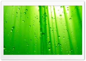 Green Simplicity HD Wide Wallpaper for Widescreen