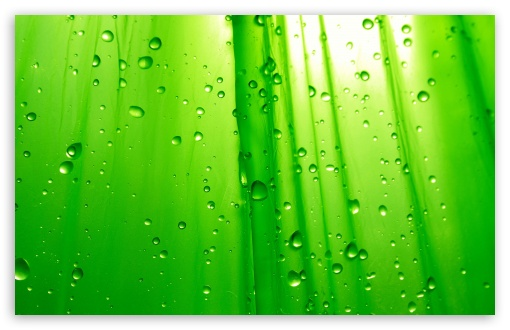 Green Simplicity HD wallpaper for Wide 16:10 5:3 Widescreen WHXGA WQXGA WUXGA WXGA WGA ; HD 16:9 High Definition WQHD QWXGA 1080p 900p 720p QHD nHD ; Standard 4:3 5:4 3:2 Fullscreen UXGA XGA SVGA QSXGA SXGA DVGA HVGA HQVGA devices ( Apple PowerBook G4 iPhone 4 3G 3GS iPod Touch ) ; Tablet 1:1 ; iPad 1/2/Mini ; Mobile 4:3 5:3 3:2 16:9 5:4 - UXGA XGA SVGA WGA DVGA HVGA HQVGA devices ( Apple PowerBook G4 iPhone 4 3G 3GS iPod Touch ) WQHD QWXGA 1080p 900p 720p QHD nHD QSXGA SXGA ;