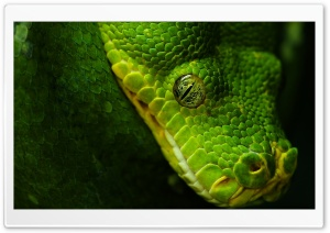 Green Snake Ultra HD Wallpaper for 4K UHD Widescreen desktop, tablet & smartphone