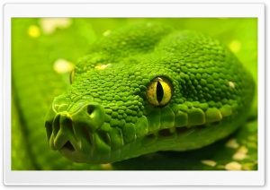 Green Snake Head HD Wide Wallpaper for Widescreen