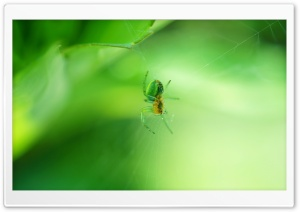 Green Spider HD Wide Wallpaper for Widescreen