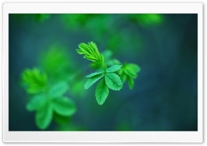Green Spring Leaves HD Wide Wallpaper for Widescreen