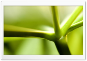 Green Stem HD Wide Wallpaper for Widescreen