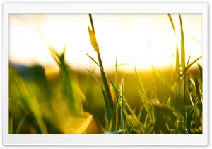 Green Sunset HD Wide Wallpaper for Widescreen