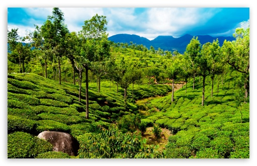 Green tea field, Kerala, India ❤ 4K UHD Wallpaper for Wide 16:10 5:3 Widescreen WHXGA WQXGA WUXGA WXGA WGA ; 4K UHD 16:9 Ultra High Definition 2160p 1440p 1080p 900p 720p ; Standard 4:3 5:4 3:2 Fullscreen UXGA XGA SVGA QSXGA SXGA DVGA HVGA HQVGA ( Apple PowerBook G4 iPhone 4 3G 3GS iPod Touch ) ; Smartphone 5:3 WGA ; Tablet 1:1 ; iPad 1/2/Mini ; Mobile 4:3 5:3 3:2 16:9 5:4 - UXGA XGA SVGA WGA DVGA HVGA HQVGA ( Apple PowerBook G4 iPhone 4 3G 3GS iPod Touch ) 2160p 1440p 1080p 900p 720p QSXGA SXGA ; Dual 16:10 5:3 16:9 4:3 5:4 WHXGA WQXGA WUXGA WXGA WGA 2160p 1440p 1080p 900p 720p UXGA XGA SVGA QSXGA SXGA ;