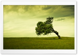 Green Tree HD Wide Wallpaper for Widescreen