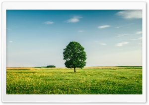 Green Tree HD Wide Wallpaper for 4K UHD Widescreen desktop & smartphone