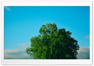 Green Tree, Blue Sky HD Wide Wallpaper for Widescreen