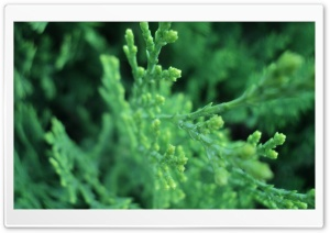 Green Tree Branches HD Wide Wallpaper for Widescreen