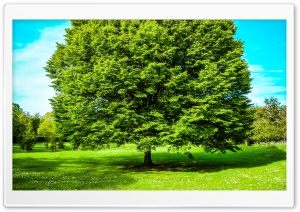 Green Tree, Spring HD Wide Wallpaper for 4K UHD Widescreen desktop & smartphone