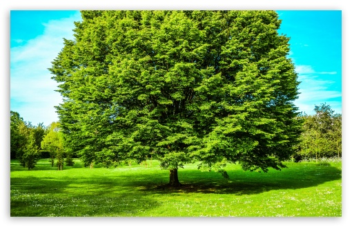 Green Tree, Spring HD wallpaper for Wide 16:10 5:3 Widescreen WHXGA WQXGA WUXGA WXGA WGA ; HD 16:9 High Definition WQHD QWXGA 1080p 900p 720p QHD nHD ; UHD 16:9 WQHD QWXGA 1080p 900p 720p QHD nHD ; Standard 4:3 5:4 3:2 Fullscreen UXGA XGA SVGA QSXGA SXGA DVGA HVGA HQVGA devices ( Apple PowerBook G4 iPhone 4 3G 3GS iPod Touch ) ; Smartphone 5:3 WGA ; Tablet 1:1 ; iPad 1/2/Mini ; Mobile 4:3 5:3 3:2 16:9 5:4 - UXGA XGA SVGA WGA DVGA HVGA HQVGA devices ( Apple PowerBook G4 iPhone 4 3G 3GS iPod Touch ) WQHD QWXGA 1080p 900p 720p QHD nHD QSXGA SXGA ;