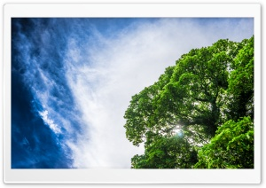 Green Tree, Sun, Blue Sky HD Wide Wallpaper for 4K UHD Widescreen desktop & smartphone