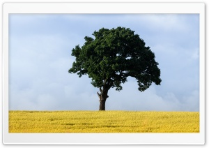 Green Tree, Yellow Grass Field Ultra HD Wallpaper for 4K UHD Widescreen desktop, tablet & smartphone