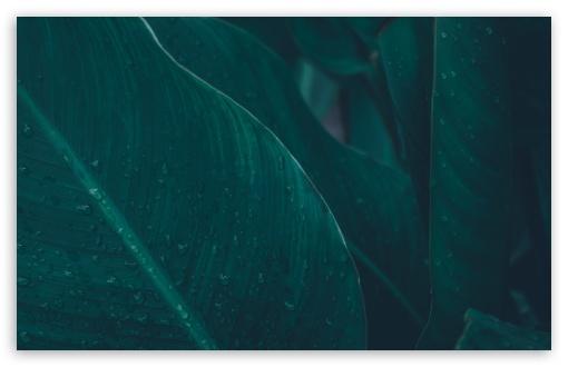 Green Tropical Leaves UltraHD Wallpaper for Wide 16:10 5:3 Widescreen WHXGA WQXGA WUXGA WXGA WGA ; UltraWide 21:9 24:10 ; 8K UHD TV 16:9 Ultra High Definition 2160p 1440p 1080p 900p 720p ; UHD 16:9 2160p 1440p 1080p 900p 720p ; Standard 4:3 5:4 3:2 Fullscreen UXGA XGA SVGA QSXGA SXGA DVGA HVGA HQVGA ( Apple PowerBook G4 iPhone 4 3G 3GS iPod Touch ) ; Smartphone 16:9 3:2 5:3 2160p 1440p 1080p 900p 720p DVGA HVGA HQVGA ( Apple PowerBook G4 iPhone 4 3G 3GS iPod Touch ) WGA ; Tablet 1:1 ; iPad 1/2/Mini ; Mobile 4:3 5:3 3:2 16:9 5:4 - UXGA XGA SVGA WGA DVGA HVGA HQVGA ( Apple PowerBook G4 iPhone 4 3G 3GS iPod Touch ) 2160p 1440p 1080p 900p 720p QSXGA SXGA ;
