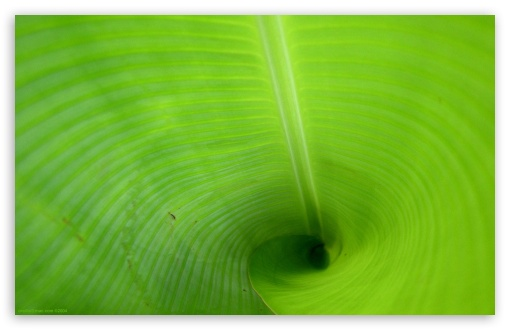 Green Tube ❤ 4K UHD Wallpaper for Wide 16:10 5:3 Widescreen WHXGA WQXGA WUXGA WXGA WGA ; 4K UHD 16:9 Ultra High Definition 2160p 1440p 1080p 900p 720p ; Standard 4:3 5:4 3:2 Fullscreen UXGA XGA SVGA QSXGA SXGA DVGA HVGA HQVGA ( Apple PowerBook G4 iPhone 4 3G 3GS iPod Touch ) ; Tablet 1:1 ; iPad 1/2/Mini ; Mobile 4:3 5:3 3:2 16:9 5:4 - UXGA XGA SVGA WGA DVGA HVGA HQVGA ( Apple PowerBook G4 iPhone 4 3G 3GS iPod Touch ) 2160p 1440p 1080p 900p 720p QSXGA SXGA ;