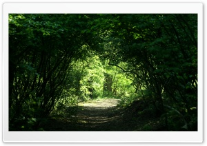 Green Tunnel HD Wide Wallpaper for Widescreen