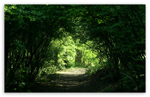 Green Tunnel ❤ 4K UHD Wallpaper for Wide 16:10 5:3 Widescreen WHXGA WQXGA WUXGA WXGA WGA ; 4K UHD 16:9 Ultra High Definition 2160p 1440p 1080p 900p 720p ; Standard 4:3 5:4 3:2 Fullscreen UXGA XGA SVGA QSXGA SXGA DVGA HVGA HQVGA ( Apple PowerBook G4 iPhone 4 3G 3GS iPod Touch ) ; Tablet 1:1 ; iPad 1/2/Mini ; Mobile 4:3 5:3 3:2 16:9 5:4 - UXGA XGA SVGA WGA DVGA HVGA HQVGA ( Apple PowerBook G4 iPhone 4 3G 3GS iPod Touch ) 2160p 1440p 1080p 900p 720p QSXGA SXGA ; Dual 16:10 4:3 5:4 WHXGA WQXGA WUXGA WXGA UXGA XGA SVGA QSXGA SXGA ;