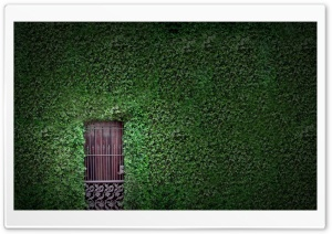 Green Wall HD Wide Wallpaper for Widescreen