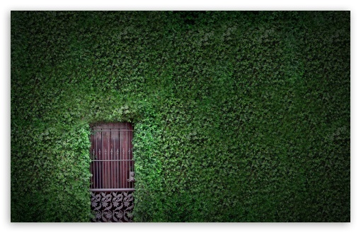 Green Wall HD wallpaper for Wide 16:10 5:3 Widescreen WHXGA WQXGA WUXGA WXGA WGA ; HD 16:9 High Definition WQHD QWXGA 1080p 900p 720p QHD nHD ; Standard 4:3 5:4 3:2 Fullscreen UXGA XGA SVGA QSXGA SXGA DVGA HVGA HQVGA devices ( Apple PowerBook G4 iPhone 4 3G 3GS iPod Touch ) ; Tablet 1:1 ; iPad 1/2/Mini ; Mobile 4:3 5:3 3:2 16:9 5:4 - UXGA XGA SVGA WGA DVGA HVGA HQVGA devices ( Apple PowerBook G4 iPhone 4 3G 3GS iPod Touch ) WQHD QWXGA 1080p 900p 720p QHD nHD QSXGA SXGA ; Dual 16:10 5:3 16:9 4:3 5:4 WHXGA WQXGA WUXGA WXGA WGA WQHD QWXGA 1080p 900p 720p QHD nHD UXGA XGA SVGA QSXGA SXGA ;