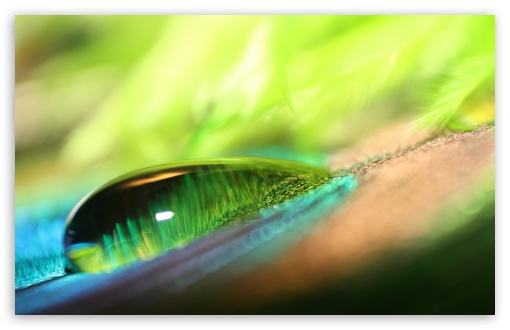Green Water Drop Bokeh ❤ 4K UHD Wallpaper for Wide 16:10 5:3 Widescreen WHXGA WQXGA WUXGA WXGA WGA ; 4K UHD 16:9 Ultra High Definition 2160p 1440p 1080p 900p 720p ; UHD 16:9 2160p 1440p 1080p 900p 720p ; Standard 4:3 5:4 3:2 Fullscreen UXGA XGA SVGA QSXGA SXGA DVGA HVGA HQVGA ( Apple PowerBook G4 iPhone 4 3G 3GS iPod Touch ) ; iPad 1/2/Mini ; Mobile 4:3 5:3 3:2 16:9 5:4 - UXGA XGA SVGA WGA DVGA HVGA HQVGA ( Apple PowerBook G4 iPhone 4 3G 3GS iPod Touch ) 2160p 1440p 1080p 900p 720p QSXGA SXGA ;