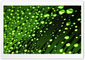 Green Water Droplets HD Wide Wallpaper for 4K UHD Widescreen desktop & smartphone
