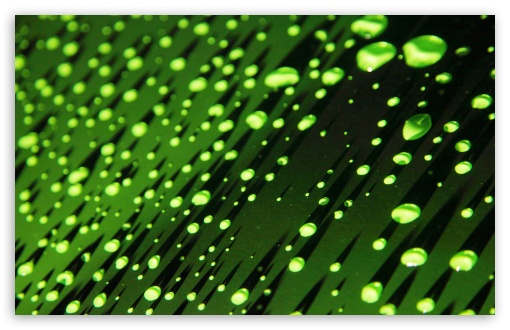 Green Water Droplets ❤ 4K UHD Wallpaper for Wide 16:10 5:3 Widescreen WHXGA WQXGA WUXGA WXGA WGA ; 4K UHD 16:9 Ultra High Definition 2160p 1440p 1080p 900p 720p ; UHD 16:9 2160p 1440p 1080p 900p 720p ; Standard 4:3 5:4 3:2 Fullscreen UXGA XGA SVGA QSXGA SXGA DVGA HVGA HQVGA ( Apple PowerBook G4 iPhone 4 3G 3GS iPod Touch ) ; Tablet 1:1 ; iPad 1/2/Mini ; Mobile 4:3 5:3 3:2 16:9 5:4 - UXGA XGA SVGA WGA DVGA HVGA HQVGA ( Apple PowerBook G4 iPhone 4 3G 3GS iPod Touch ) 2160p 1440p 1080p 900p 720p QSXGA SXGA ;