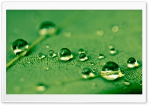 Green Waterdrops HD Wide Wallpaper for Widescreen