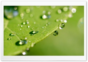 Green Wet Leaf, Macro HD Wide Wallpaper for Widescreen