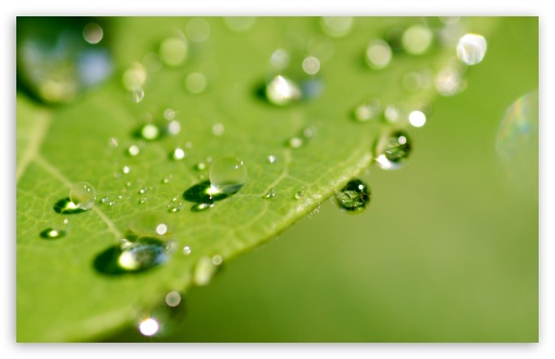 Green Wet Leaf, Macro HD wallpaper for Wide 16:10 5:3 Widescreen WHXGA WQXGA WUXGA WXGA WGA ; HD 16:9 High Definition WQHD QWXGA 1080p 900p 720p QHD nHD ; Standard 4:3 5:4 3:2 Fullscreen UXGA XGA SVGA QSXGA SXGA DVGA HVGA HQVGA devices ( Apple PowerBook G4 iPhone 4 3G 3GS iPod Touch ) ; iPad 1/2/Mini ; Mobile 4:3 5:3 3:2 16:9 5:4 - UXGA XGA SVGA WGA DVGA HVGA HQVGA devices ( Apple PowerBook G4 iPhone 4 3G 3GS iPod Touch ) WQHD QWXGA 1080p 900p 720p QHD nHD QSXGA SXGA ;