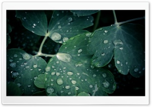 Green Wet Leaves HD Wide Wallpaper for Widescreen