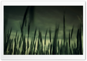 Green Wheat Field And Stormy Weather HD Wide Wallpaper for Widescreen