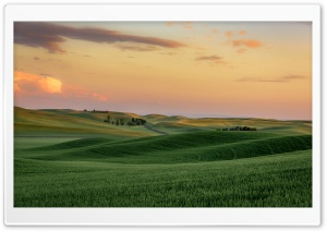 Green Wheat Fields near Palouse, Hills, Washington Ultra HD Wallpaper for 4K UHD Widescreen desktop, tablet & smartphone